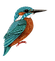 Mr Kingfisher no branch png facing right
