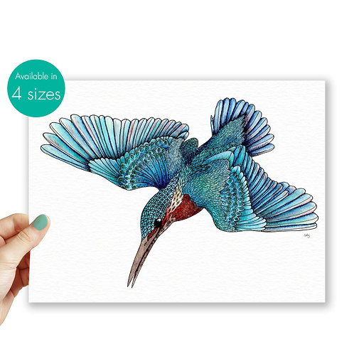 Kingfisher drawing, bird illustration nature print, Kingfisher gift blue decor