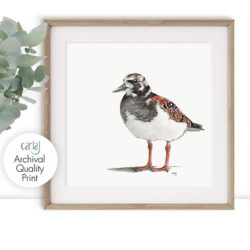 Shore Bird Illustration Art Print, Minimal Print, Turnstone Coastal Bird Drawing
