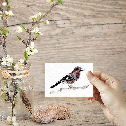 Small Jay bird ACEO print, Tiny art print mini birds mini art prints bird lover