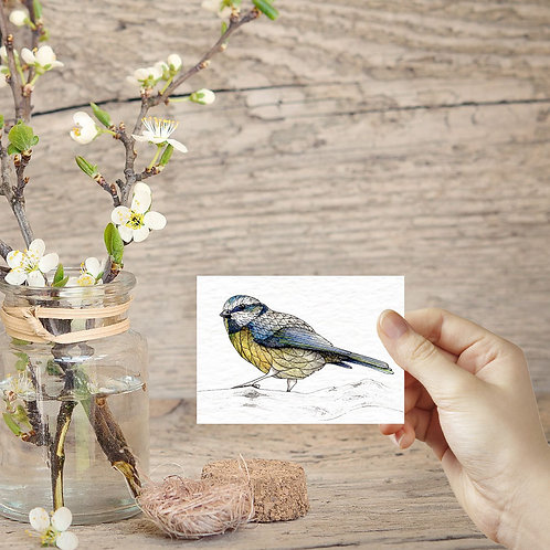 British garden birds Blue Tit tiny art print ACEO print miniature prints mini bi