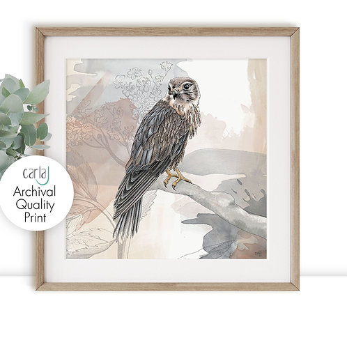 Bird of Prey print, Wildlife Art for the Bird Watcher and Bird Lover