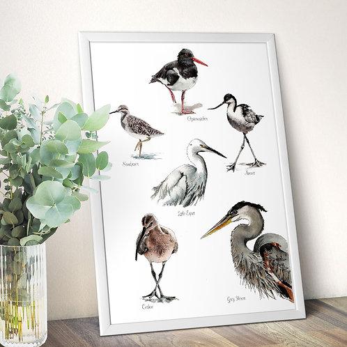 Birds poster, wading bird wall art print, coastal birds illustration print, hous