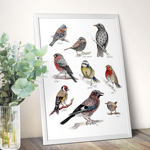 British garden birds poster, wildlife wall art print, nature illustration housew