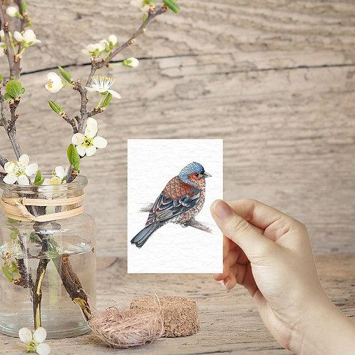 Finch bird ACEO print miniature prints tiny art mini british garden birds