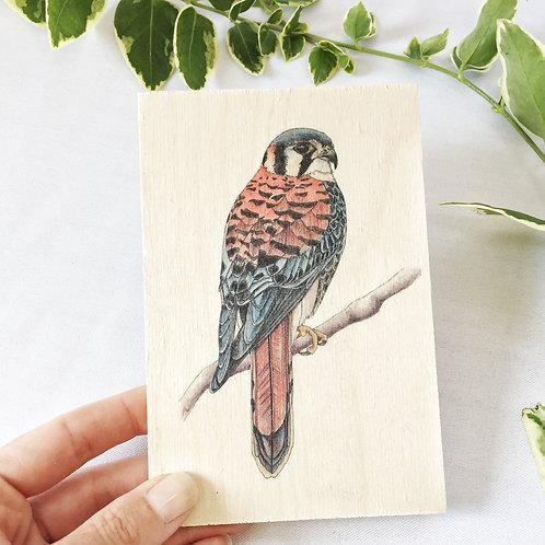 Kestrel Wooden Postcard, Bird of Prey Gift, Wood Postcard, Bird Print on Wood