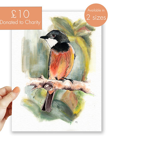 Australian bird print, charity donation, nature wall art pastel prints