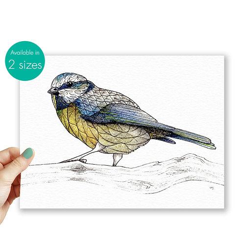 Bird print Blue Tit, british birds artwork prints, bird illustration nature wall