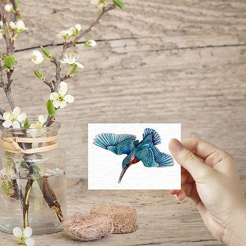Kingfisher tiny art print ACEO print mini birds mini art prints bird lover small