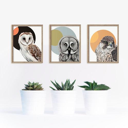 Modern Scandi Art Print Set of 3 Birds of Prey, Owls Prints, Scandinavian Style