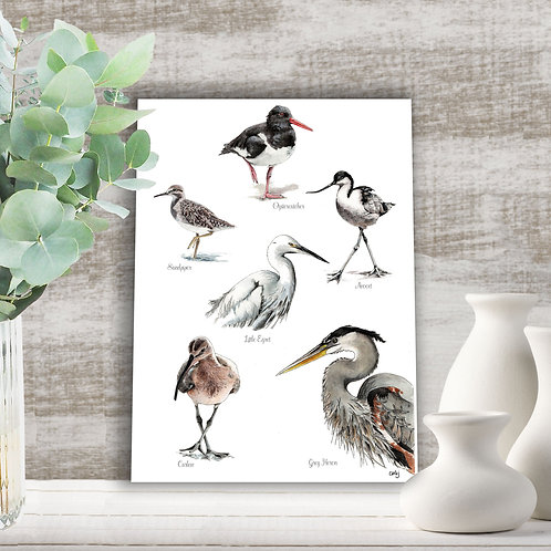 Birds art print, nature home decor, british estuary birds illustration print