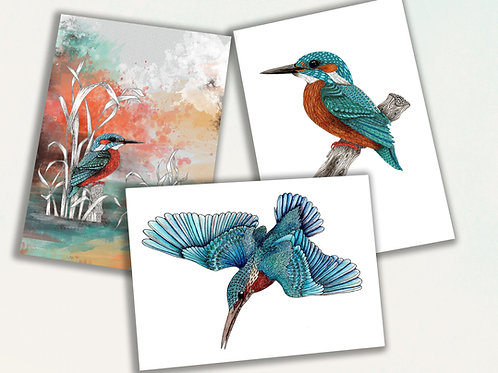 Kingfisher card set, stationery set of 3 greeting cards, birds cards, Kingfisher