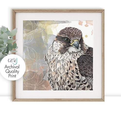 Falcon art print, Bird of Prey illustration, Wildlife art for the Bird watcher,
