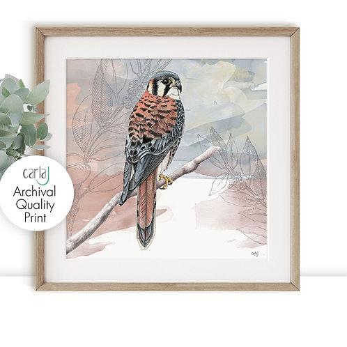 Kestrel print, Bird of Prey Wildlife Art for the Bird Watcher and Bird Lover