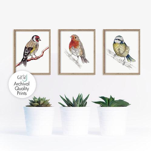 British Garden Birds Set of 3 Art Prints, Robin Print, Blue Tit, Goldfinch Art