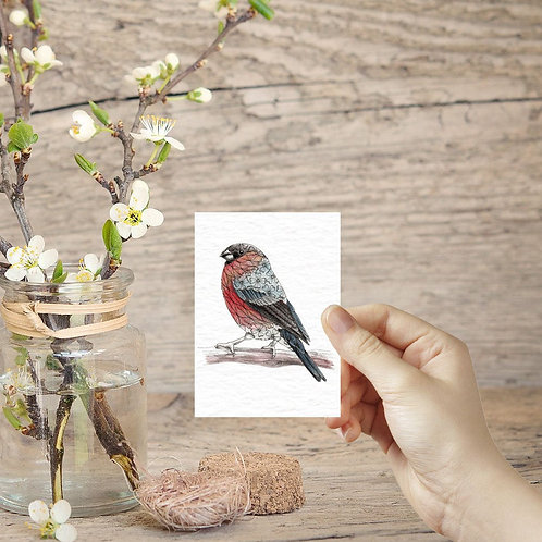 Miniature ACEO prints Bullfinch tiny art print mini British garden birds