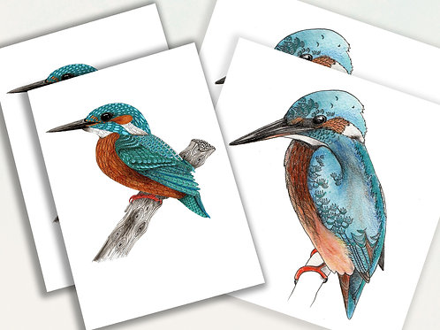 Kingfisher card pack of 4, stationery set nature gift, birds cards set