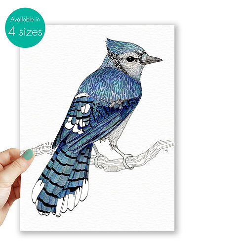 Blue Jay bird illustration art print, blue wall art bird lover gift, nature prin