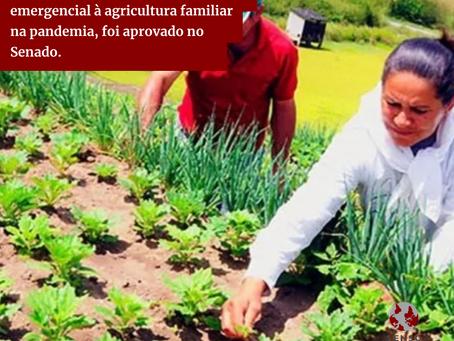 PL 823/2021, que dá auxílio emergencial à agricultura familiar na pandemia, é aprovado no Senado.