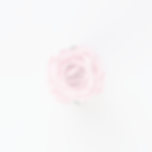 blooming%2520pink%2520flower_edited_edit