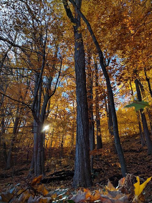 Fall inTrees