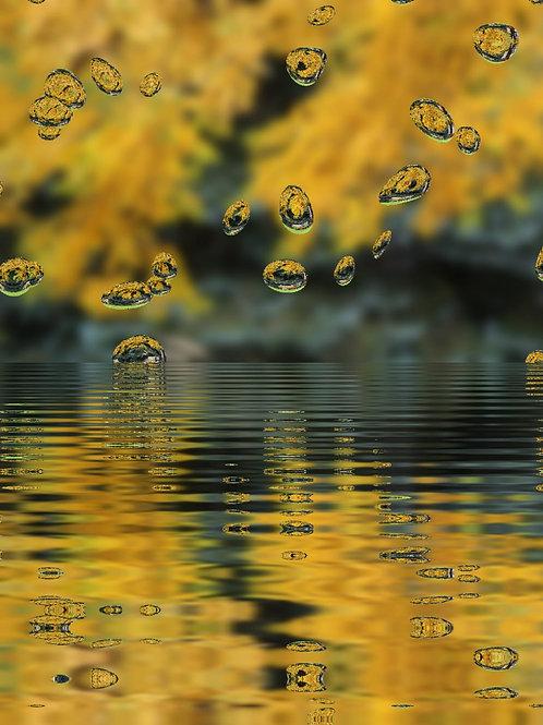 Goldenrod Reflection