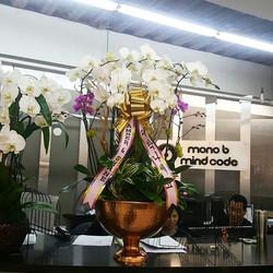 Orchid arrangement for grand opening.jpg🎆 #moonatelier_la #dtla_