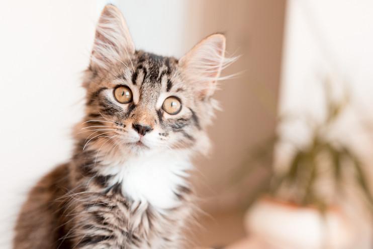 Cat-Kitten-Pet-Photographer-Sydney-2018-
