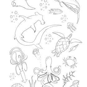 ocean-animals.jpg