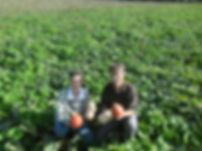 sarthe, courges bio, production bio, agriculture, ferme bio, fournisseur bio