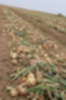 CHAMP BIO RACINE, culture plein champ, entreprise agricole, association, agriculture, région centre