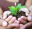 conseil echalote, conseil jardin, conseil echalote jardin, faire pousser echalote, potager echalote
