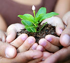 conseil jardin, conseil culture echalion, echalion jardin, jardin bio, potager bio