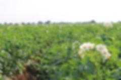 BIO , producteur d'ail, producteur de courges, producteur d'échalotes, producteur d'oignon bio, producteur de pomme de terre bio