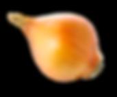 OIGNON JAUNE BIO RACINE, oignon, vente oignon, acheter oignon, produire oignon