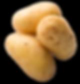 POMME DE TERRE BIO RACINE, vendre pomme de terre, acheter pomme de terre, produire pomme de terre, patate