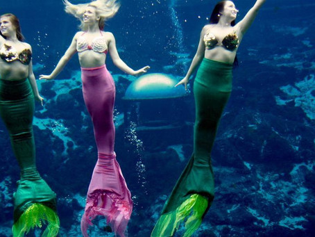 "LOOK: Cebu Ocean Park is Looking to Hire ""Mermaids"""