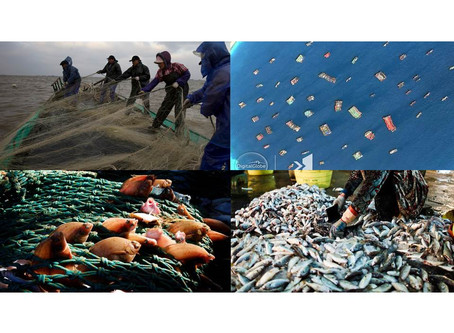 China's Oceans are Overfished; So China is Stealing 1.2 Billion Kilos of Fish from Philippine Waters