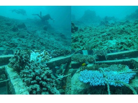 DENR STOPPED DOLOMITE MINING OPERATIONS IN CEBU DUE TO DOLOMITE'S SEVERE DAMAGES OF CORALS IN  CEBU