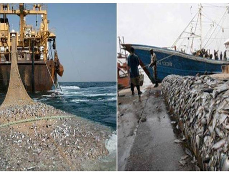 Warning to Ph: China is Plundering,Overfishing,Stealing Tons of Fish in African Waters
