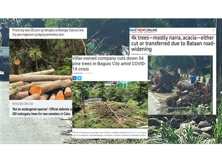 4k Narra Acacia Trees Cut Down in Bataan; 300 Mahogany cut down in Cebu;54 Pine Trees Cut in Baguio