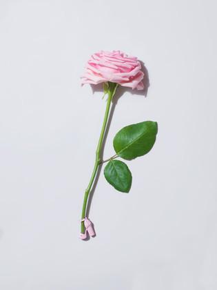 FLOWERHEALS
