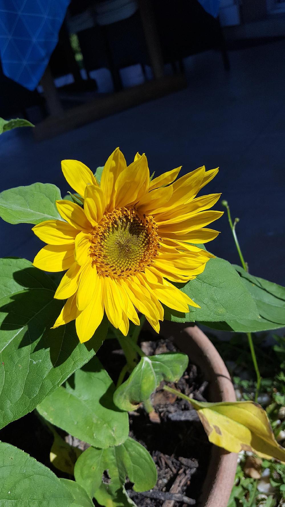 Fleur publiée par Elya