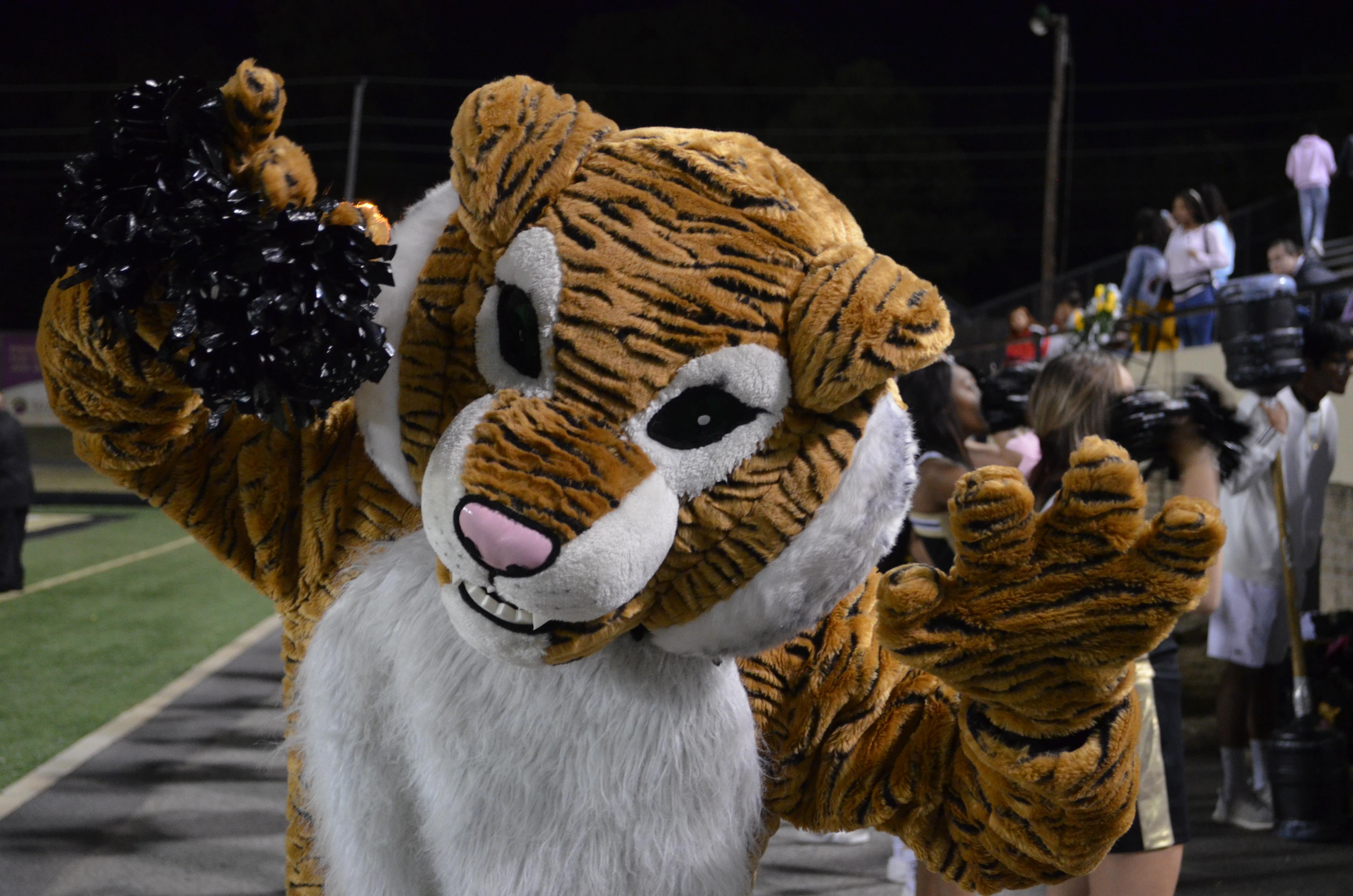 Tiger DSC_0211 photo by Annie Fortune