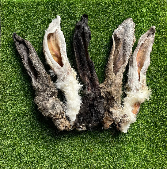 10 Rabbit Ears