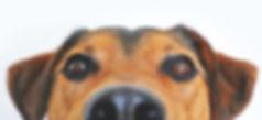 tan-black-dog-peeping.jpg
