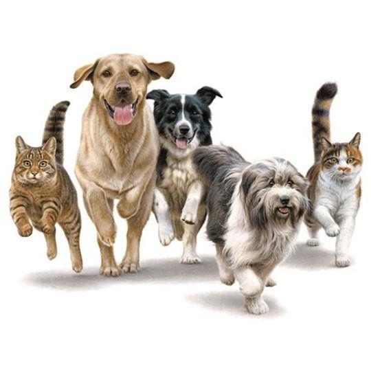 dogcatrunning.jpg