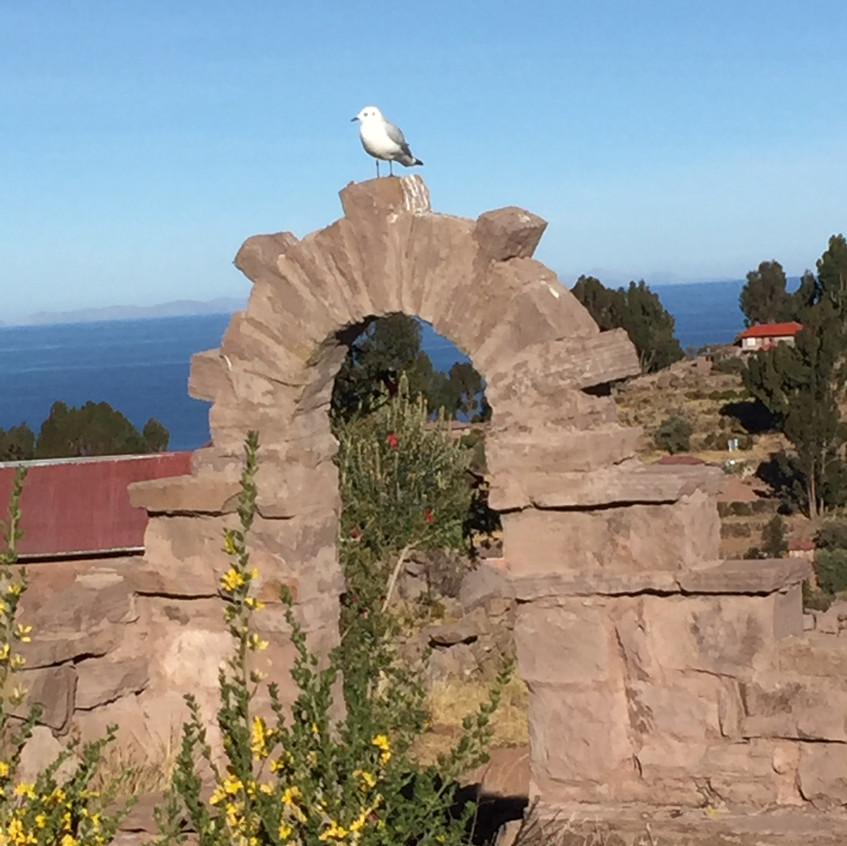 Yep, the seagull again,,, sorry...