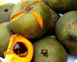 The lúcuma fruit