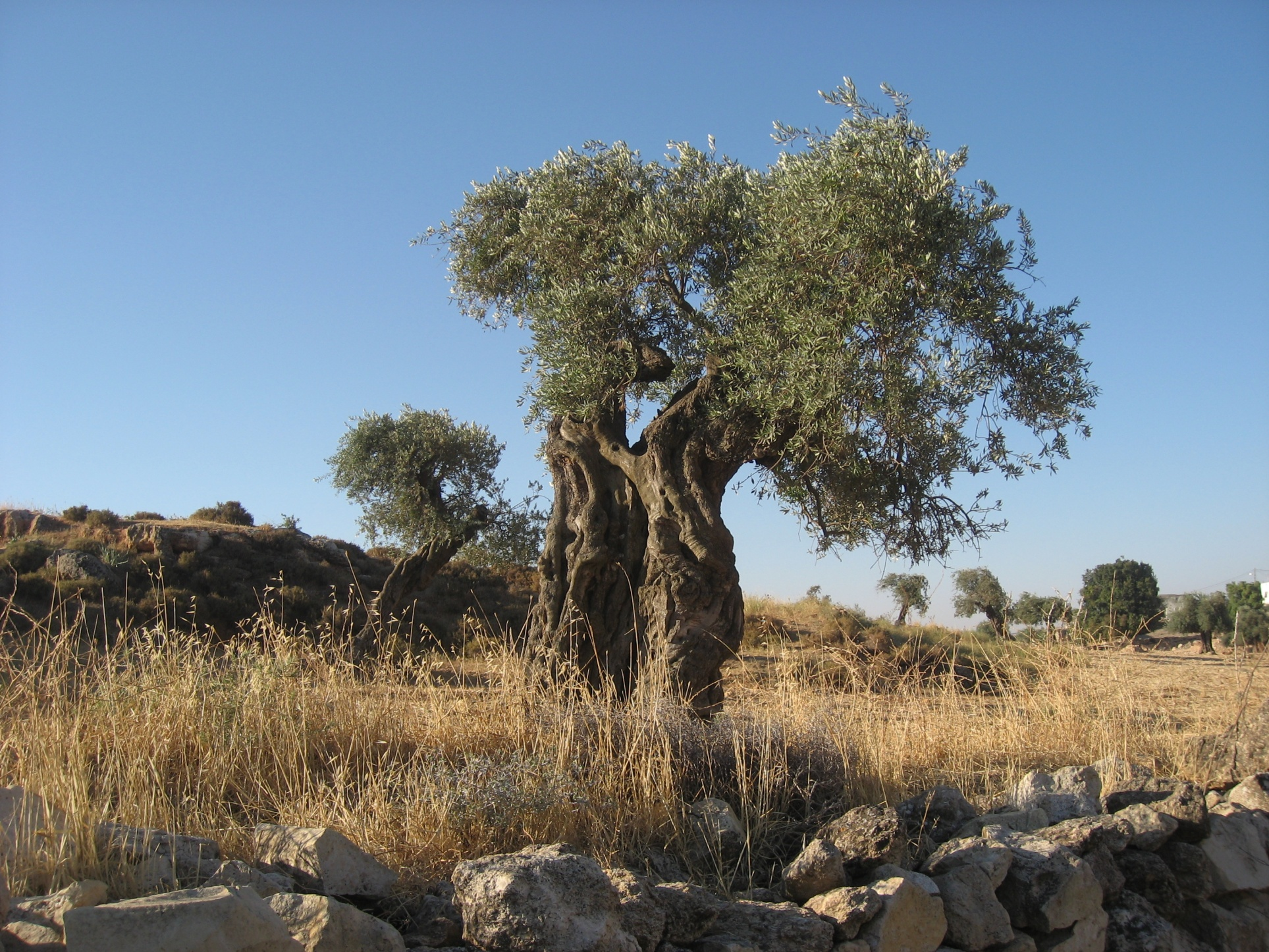 6 olivier.jpg